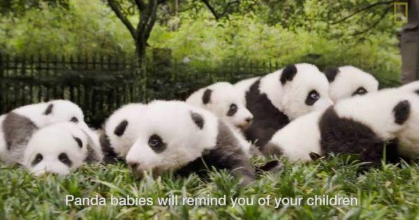 Δεν έχετε ιδέα πόσο υπέροχα πλάσματα είναι τα Πάντα (βίντεο)