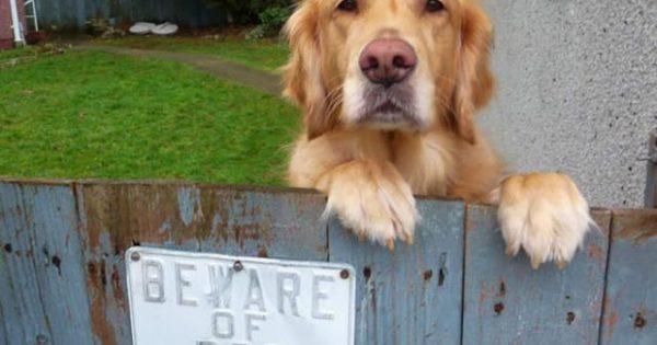 Προσοχή σκύλος: Ξεκαρδιστικές φωτογραφίες που θα σας κάνουν να λιώσετε στο γέλιο!