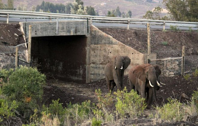 ζώα γέφυρες για ζώα