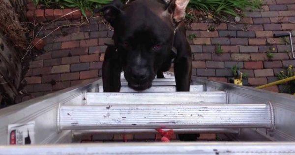 Βίντεο: Μέχρι που μπορεί να φτάσει ένας σκύλος για μία… γάτα;