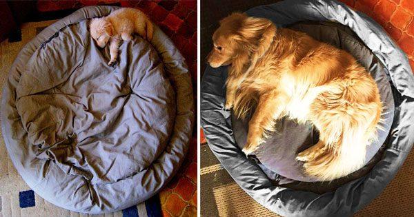 Σκυλιά από κουτάβια σε ενήλικα!