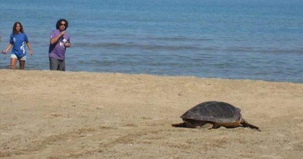 ΑΙΣΧΟΣ: Αποκεφάλισαν 10 θαλάσσιες χελώνες στη Νάξο