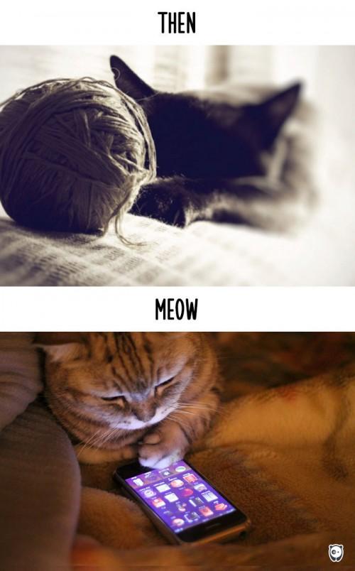 φωτογραφίες γάτες