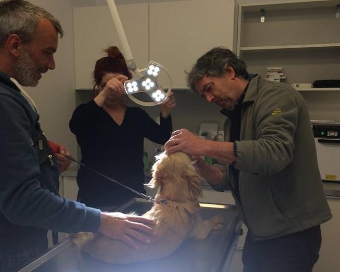 Φιλόζωοι Εθελοντές Πάρου κτηνιατρείο