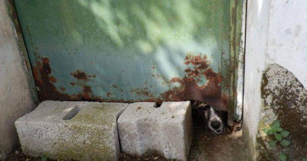 Έσωσαν την σκυλίτσα που βασάνιζε ο «ιδιοκτήτης» της κρατώντας την έγκλειστη σε δωμάτιο για 6 ολόκληρα χρόνια