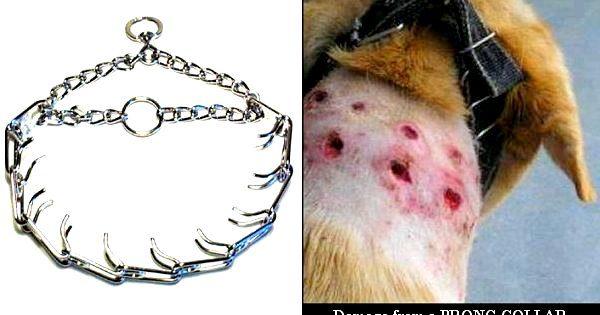 Χρήση «βοηθητικών μέσων» στην εκπαίδευση του σκύλου