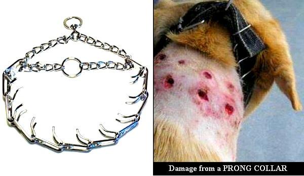 4.9.14-Ban-Prong-Collars