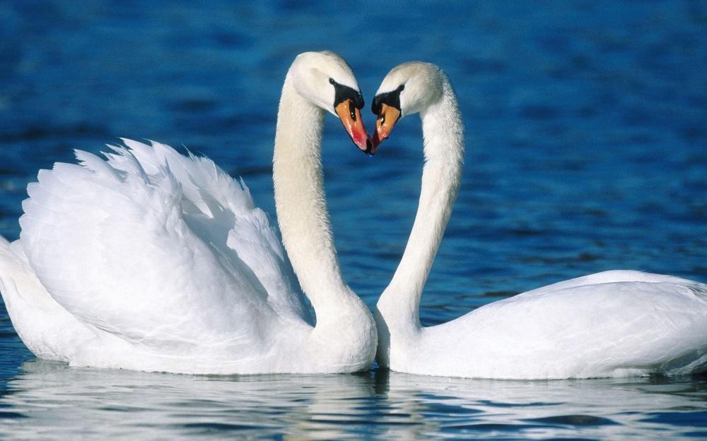 ζώα που αγαπούν το ταίρι τους με πίστη ως το τέλος