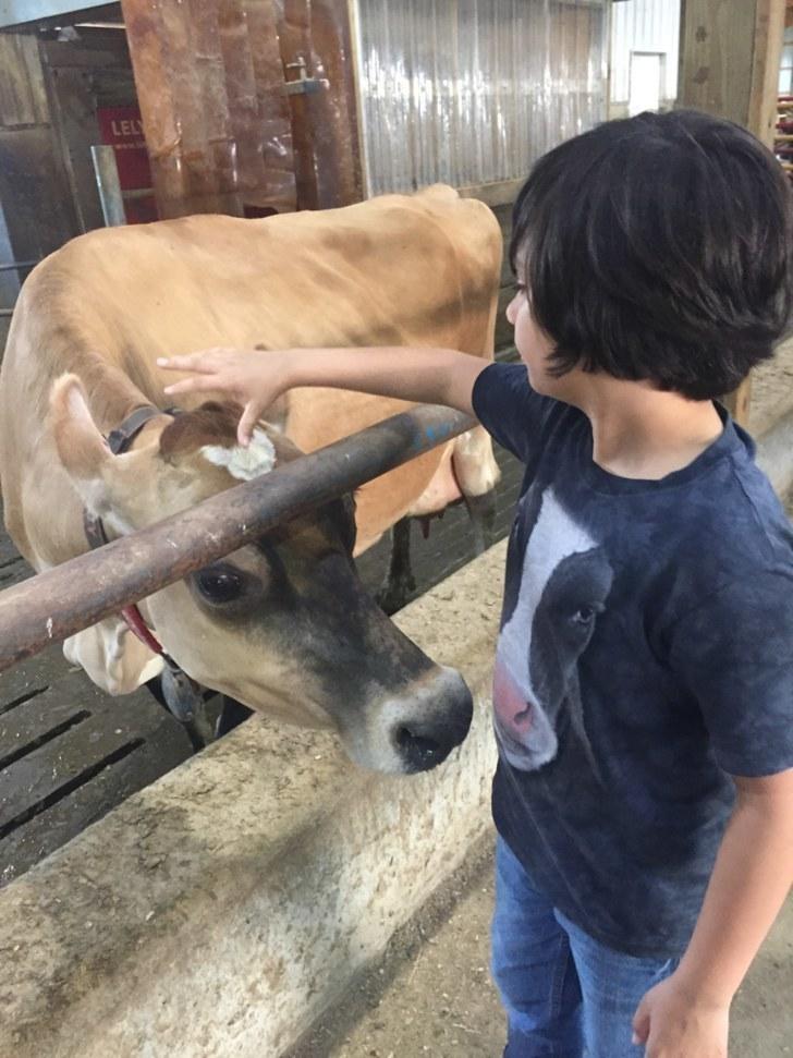 Σκύλος σκυλιά οι αγελάδες είναι το ίδιο αξιολάτρευτες με τα σκυλιά! αγελάδες αγελάδα 21 υπέροχες φωτογραφίες που αποδεικνύουν ότι οι αγελάδες είναι το ίδιο αξιολάτρευτες με τα σκυλιά!