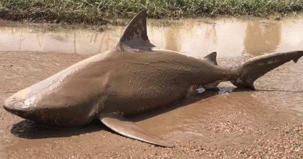 Κυκλώνας ξέβρασε καρχαρία σε δρόμο της Αυστραλίας 20 χιλιόμετρα από τη θάλασσα