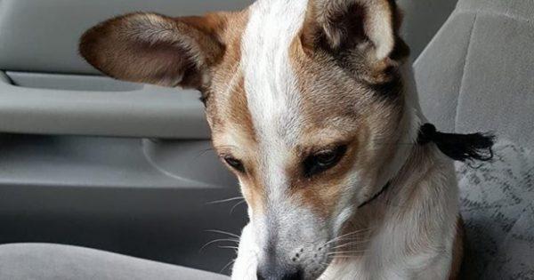 Σκυλίτσα που βρέθηκε να κλαίει στην άκρη ενός δρόμου φιλάει αμέσως την γυναίκα που την διέσωσε