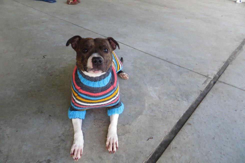 σκύλοι Σκυλάκια που κανείς δεν ήθελε παίρνουν αξιαγάπητα πουλόβερ με σκόπο να τα βοηθήσουν να βρουν σπίτι σκυλάκια που κανείς δεν ήθελε σκυλάκια