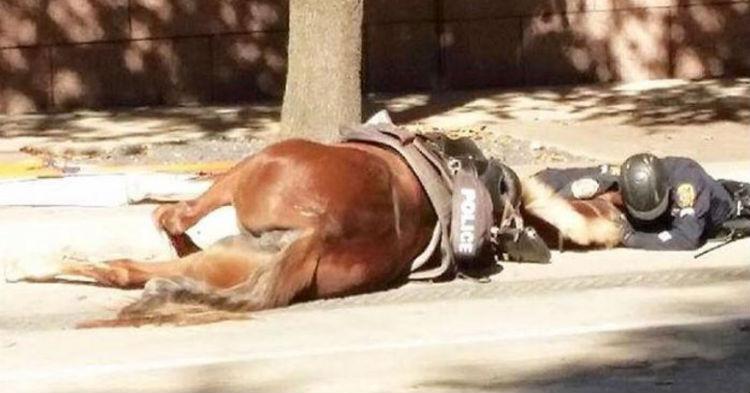 του σηκώθηκε η τρίχα! Είδε έναν αστυνομικό να σέρνεται στο έδαφος με το άλογό του. Όταν πλησίασε και κατάλαβε ΤΙ είχε συμβεί άλογο