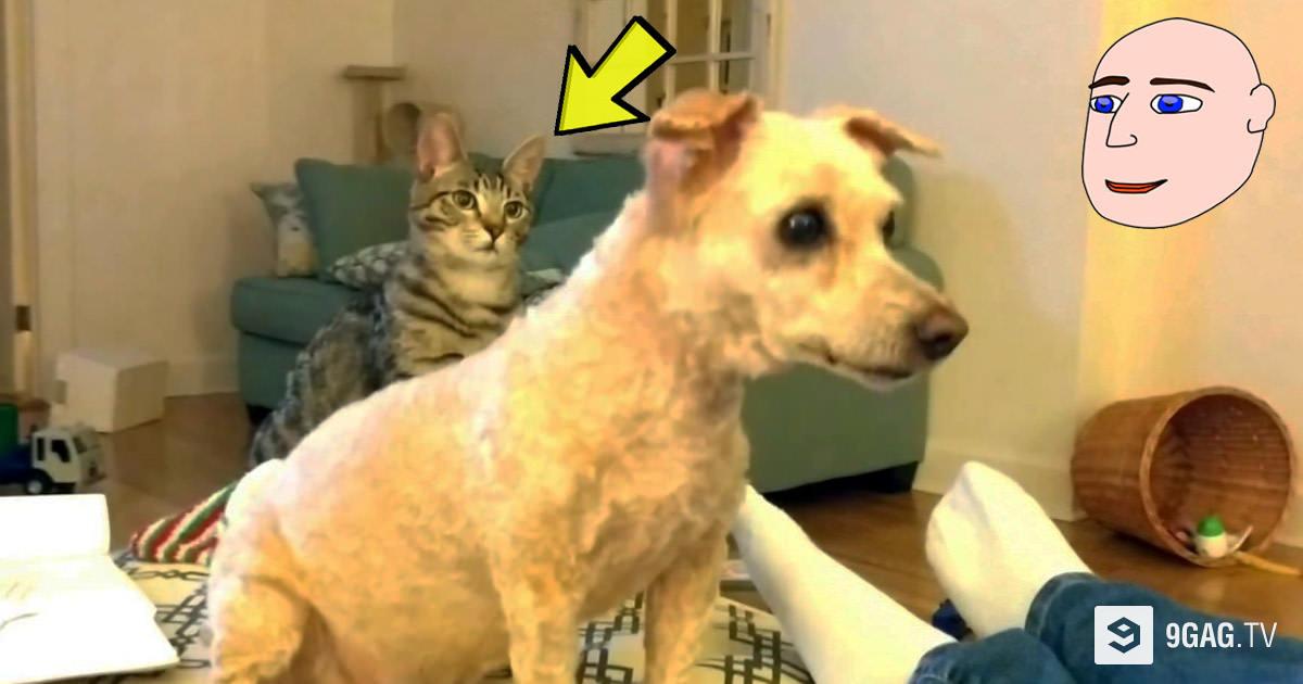 Κούρεψε τον σκύλο του για να μην ζεσταίνεται. Η επική αντίδραση της γάτας μόλις τον βλέπει κούρεψε τον σκύλο του θα σας κάνει να λιώσετε!