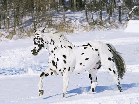 τα πιο όμορφα άλογα πάνω στον κόσμο που δεν θα πιστεύετε ότι είναι αληθινά! Αυτά είναι τα 24 πιο όμορφα άλογα του κόσμου άλογο άλογα