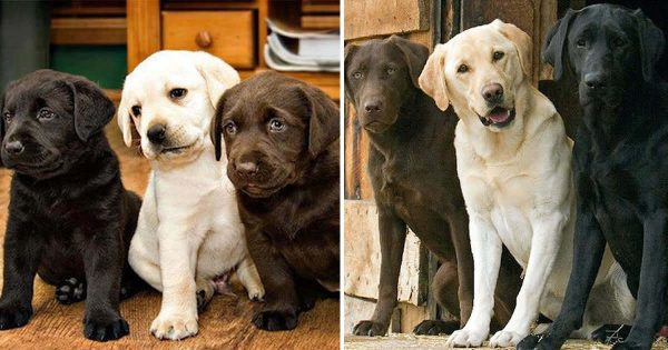 29 υπέροχες φωτογραφίες πριν και μετά από ζωάκια που μεγάλωσαν μαζί. Θα σας φτιάξουν τη μέρα!