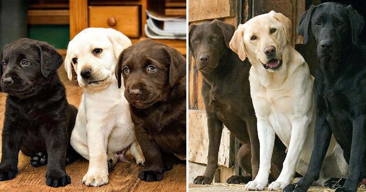 Σκύλος σκύλοι ζωάκια που μεγάλωσαν μαζί ζωάκια ζώα 29 υπέροχες φωτογραφίες πριν και μετά από ζωάκια που μεγάλωσαν μαζί. Θα σας φτιάξουν τη μέρα!