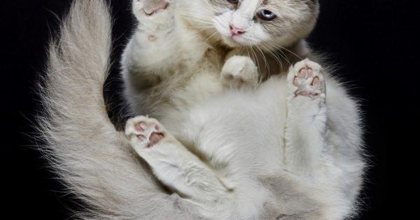 Under-Cats: Γάτες φωτογραφημένες από κάτω!