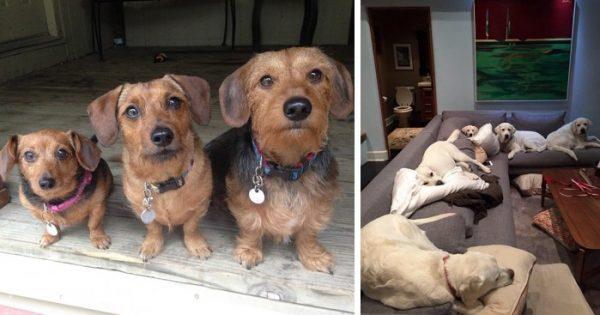 Πως είναι να ζεις με παραπάνω από 2 σκύλους;