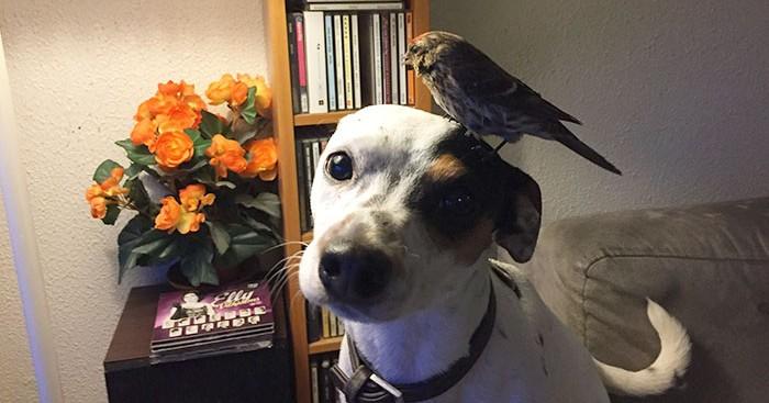 Σκύλος πουλί Ισλανδία
