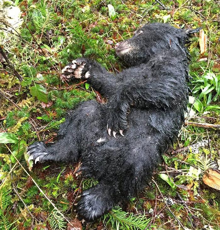 διάσωση ζώων αρκουδάκι