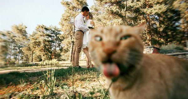 30 ξεκαρδιστικές στιγμές όπου γάτες κάνουν photobomb