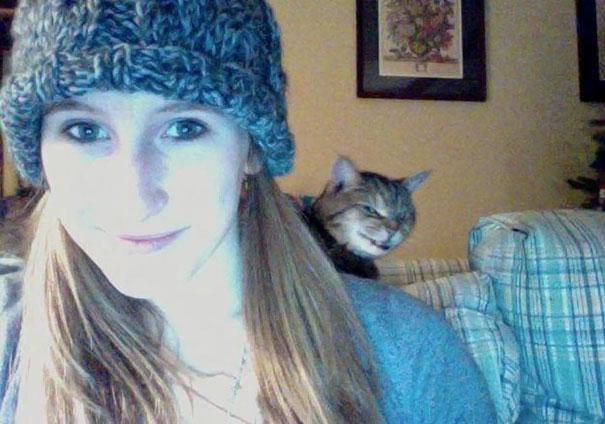 γάτες photobomb