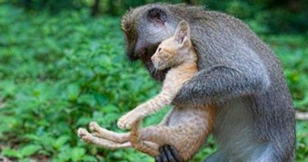 15+1 Καταπληκτικές Φωτογραφίες που ένα Ζώο βοηθάει κάποιο άλλο σε μια δύσκολη στιγμή. Ειδικά, η 11η θα σας Μαγέψει!