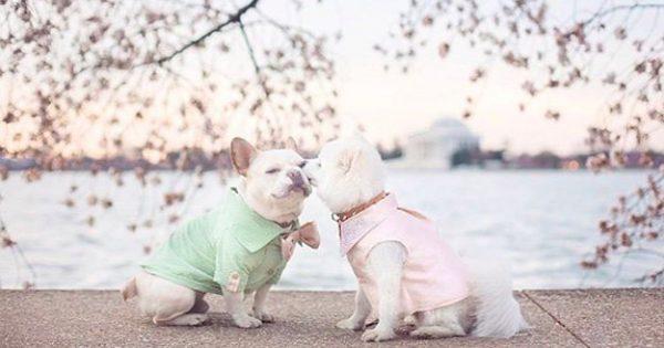Αποφάσισαν να Γιορτάσουν τον Αρραβώνατων Σκυλιών τους με μια Αναμνηστική Φωτογράφιση. Το Αποτέλεσμα; Παραμυθένιο!