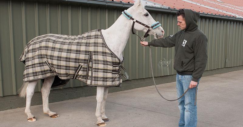 πόνι διάσωση ζώων άλογο