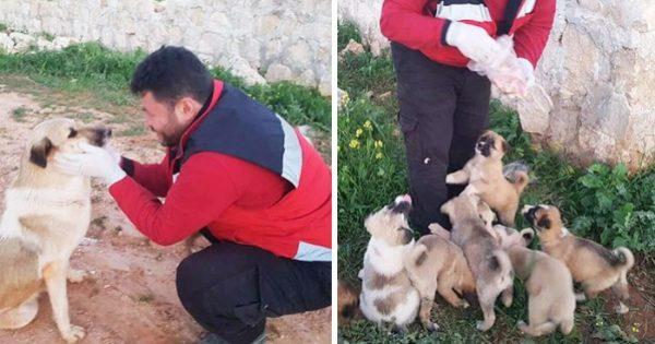 Αδέσποτη σκυλίτσα με 15 κουτάβια βρίσκει τον κατάλληλο άνθρωπο να την βοηθήσει!