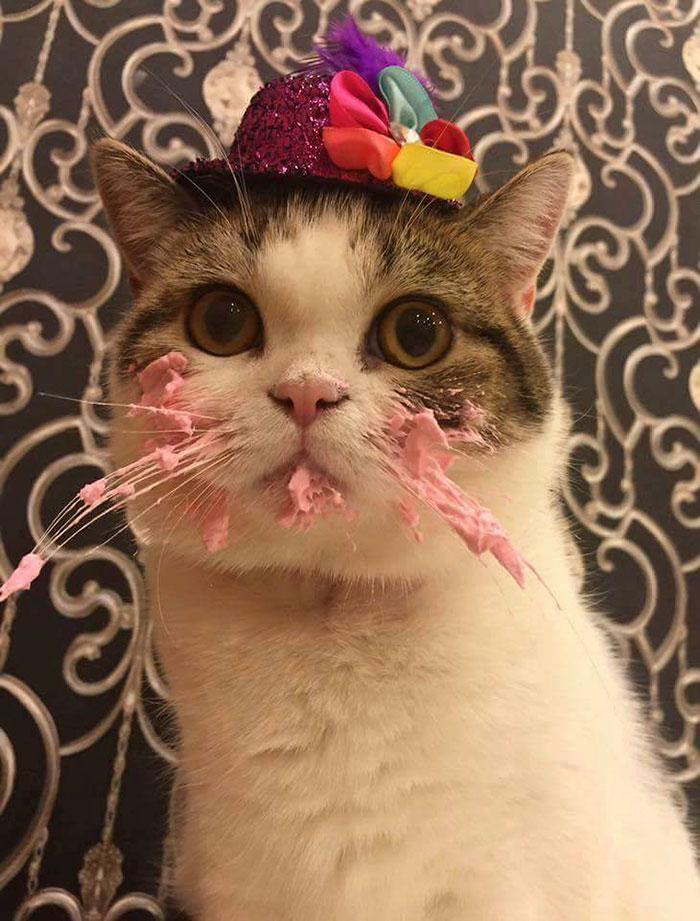 γενέθλια Γάτα