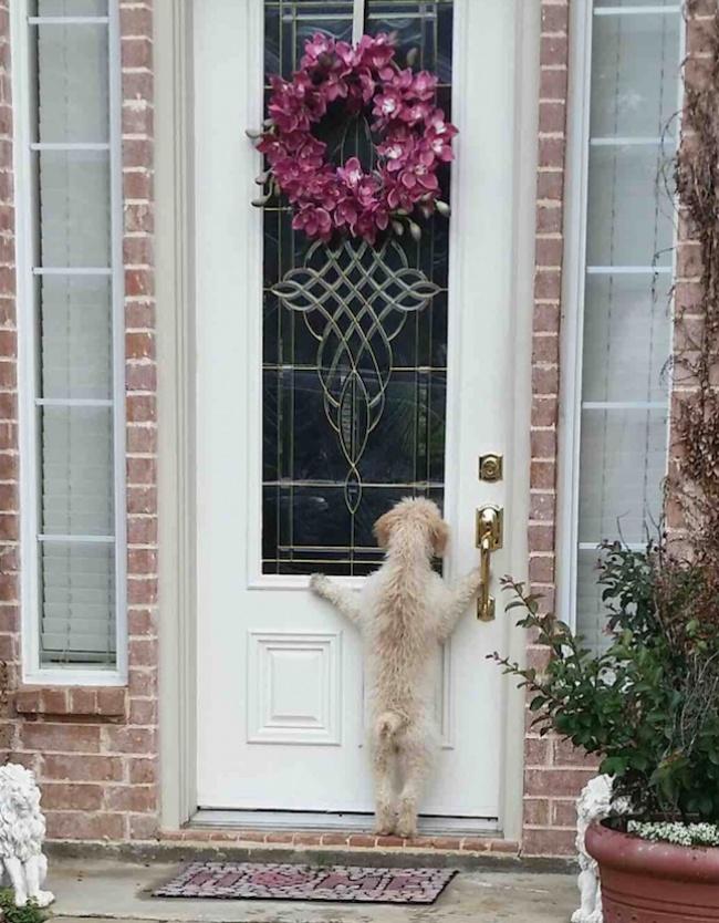 υιοθεσία σκύλων Σκύλος