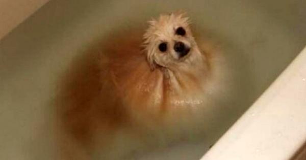 20 αξιολάτρευτες φωτογραφίες που αποδεικνύουν ότι ο σκύλος είναι ο καλύτερος φίλος του ανθρώπου. Υιοθέτησε έναν κι εσύ!