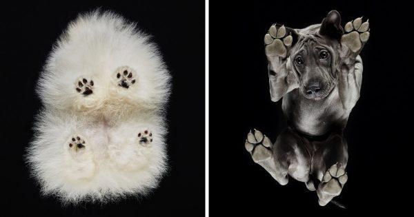 Αποφάσισε να φωτογραφίσει τις πατούσες από 20 διαφορετικές ράτσες σκύλων και ΙΔΟΥ τα αξιολάτρευτα αποτελέσματα!