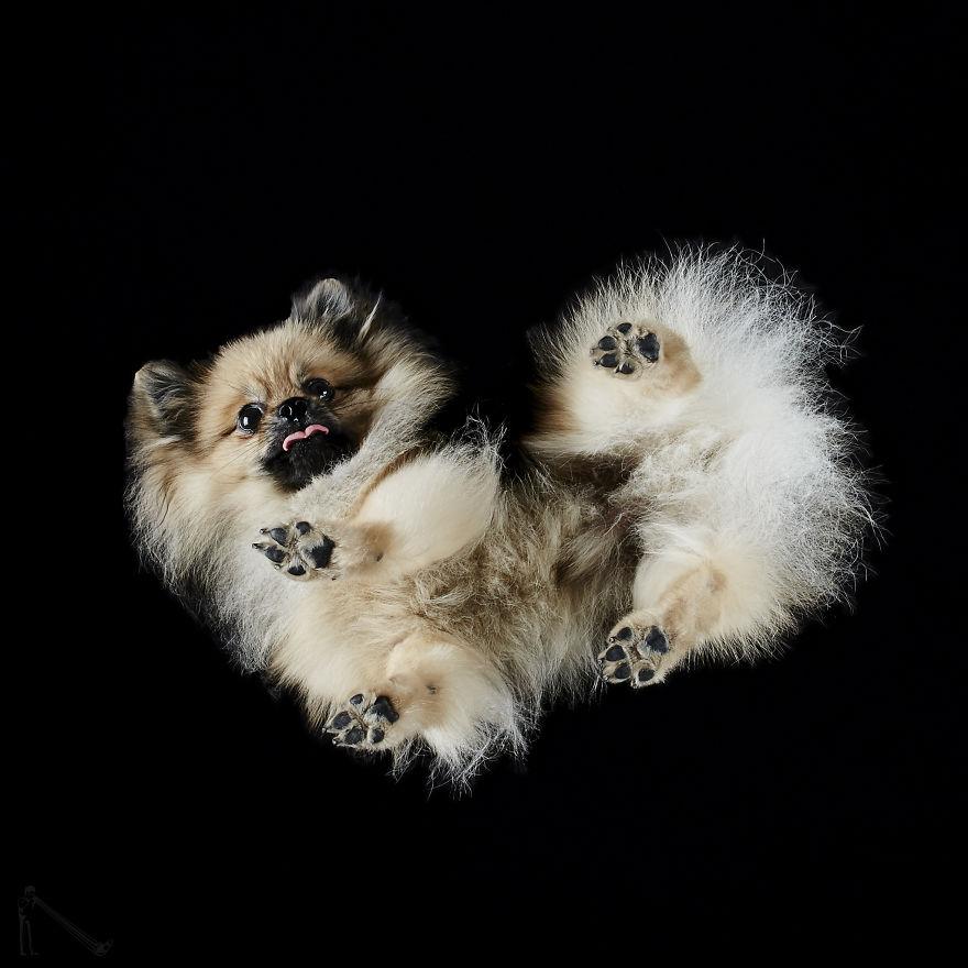 ράτσες σκύλων πατούσες