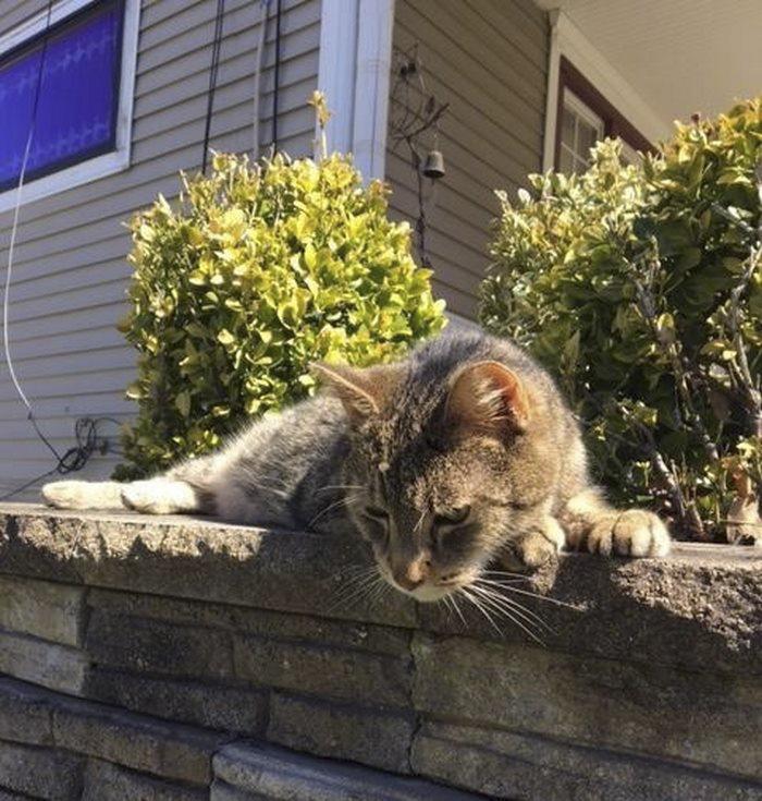 Γάτα facebook