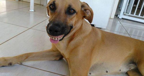 Αρχικά νόμιζε πως ο σκύλος του απλά χαμογελάει. Όταν όμως κατάλαβε ΤΙ είχε συμβεί, έπαθε την πλάκα του!