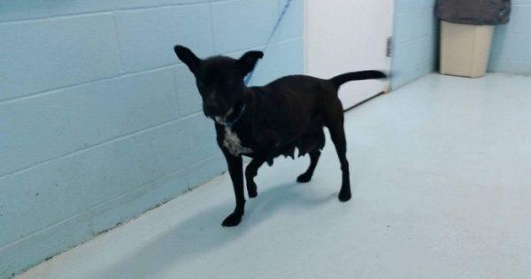 Σκυλίτσα επιβιώνει από πυρκαγιά και μετά οδηγεί τους διασώστες στα κουτάβια της