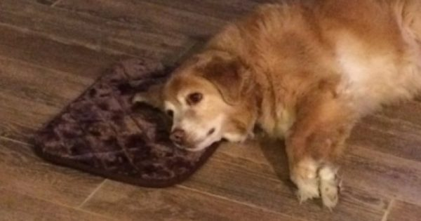 Ιδιοκτήτρια σκύλου παραγγέλνει καταλάθος μικροσκοπικό κρεβάτι και ο σκύλος της το λατρεύει παρά το λάθος