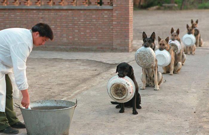 Aστυνομικοί σκύλοι