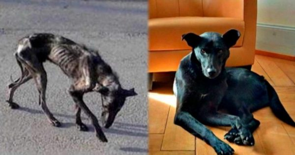 Είδε έναν κοκαλιάρικο σκύλο και έκανε τα πάντα για να τον σώσει. Η Ιστορία της Ελληνίδας που συγκλόνισε τον Πλανήτη!