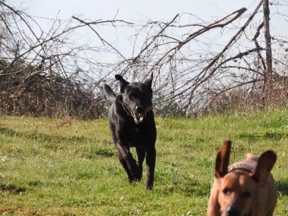 διάσωση σκύλων