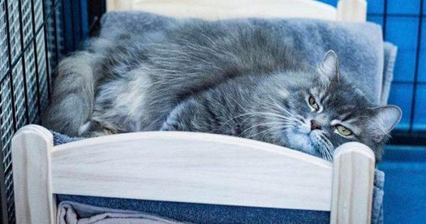 Η IKEA δώρισε μικρά κρεβάτια σε γάτες καταφύγιου ζώων