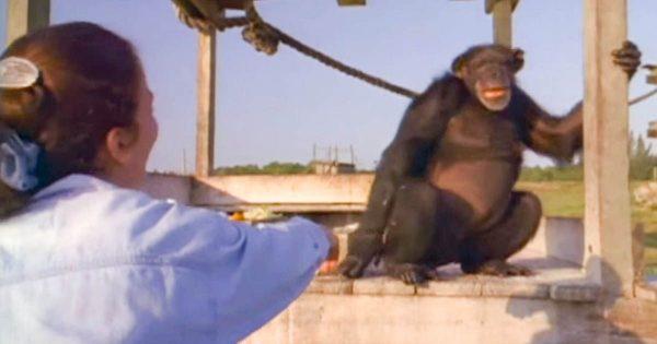 Είχε να δει τον χιμπατζή της, 18 ολόκληρα χρόνια και φοβόταν ότι δεν θα την αναγνωρίσει. Μόλις όμως του πιάνει το χέρι…