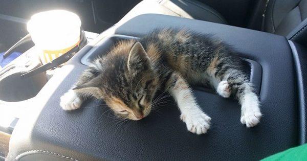 Οδηγός φορτηγού βρίσκει αδέσποτο γατάκι στη μέση του δρόμου και αυτό αποκοιμήθηκε με το που το διέσωσε