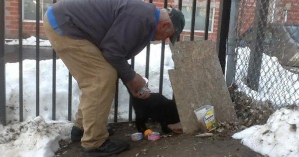 Άνδρας έχει περάσει πάνω από 20 χρόνια φροντίζοντας αδέσποτες γάτες