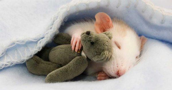 40 υπέροχες φωτογραφίες ζώων αγκαλιά με αρκουδάκια που θα σας ζεστάνουν την καρδιά