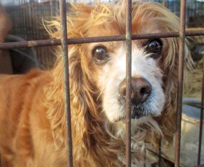 Τεράστια αγορά κρέατος σκύλων της Νότιας Κορέας που ευθύνεται για το 33% της παραγωγής της χώρας κλείνει επιτέλους! αγορά κρέατος σκύλων