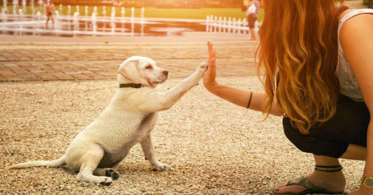 Το ξέρατε; Οι σκύλοι καταλαβαίνουν τα λόγια και τη χροιά της φωνής μας...